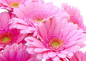 Бесплатные фото цветы,лепестки,розовые,тычинки,капли,вода