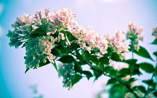Бесплатные фото ветка,куст,цветок,цветет,небо,голубое,бутон