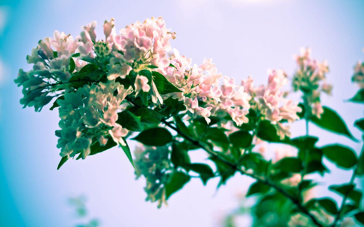 Фото бесплатно ветка, куст, цветок - на рабочий стол