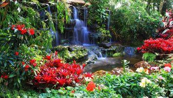 Обои водопад, вода, капли, брызги, цветки, бутоны, клумба, листья, трава, парк, камень, природа