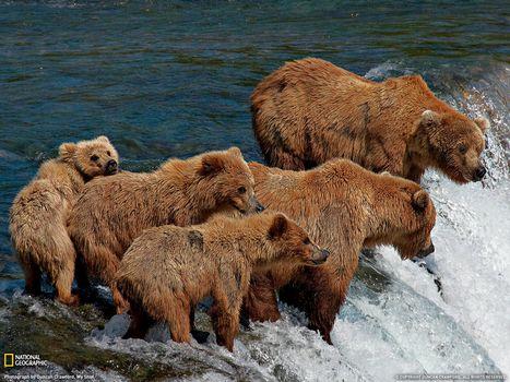 Photo free bears, sea, wave