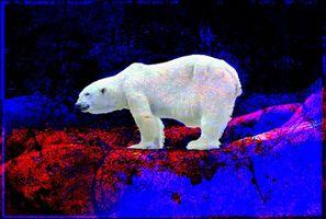 Фото бесплатно абстракция, фон, текстуры, текстура, полярный медведь
