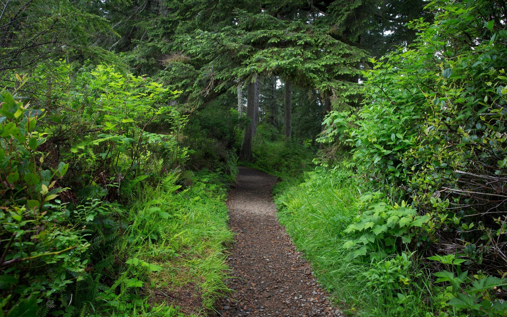 деревья, кусты, дорожка