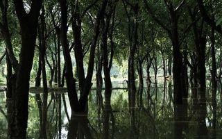 Бесплатные фото деревья,лес,вода,отражение,река,стволы,ветки