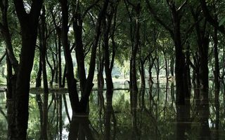 Фото бесплатно деревья, лес, вода