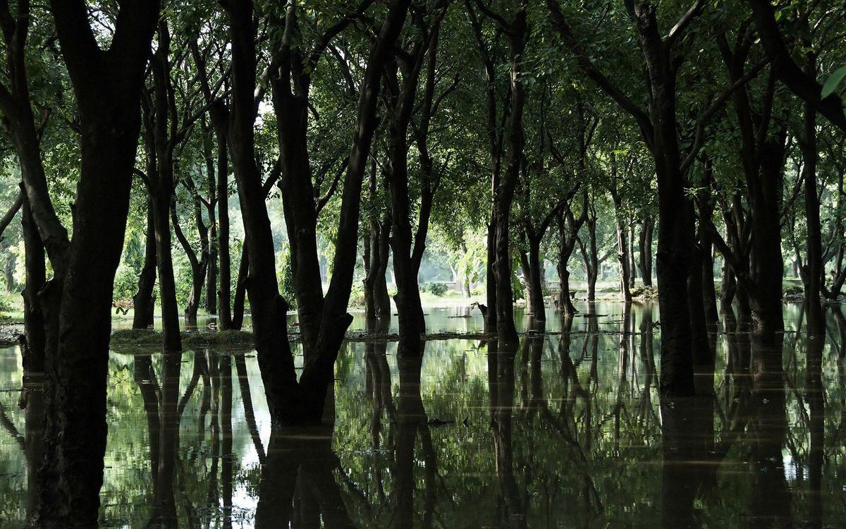 Обои деревья, лес, вода, отражение, река, стволы, ветки, листья, природа на телефон | картинки природа