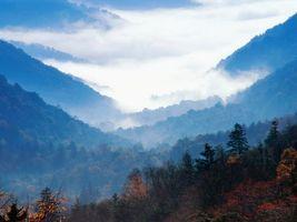 Фото бесплатно лес, туман, облака