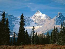 Бесплатные фото горы,снег,лес,деревья,небо,голубое,природа