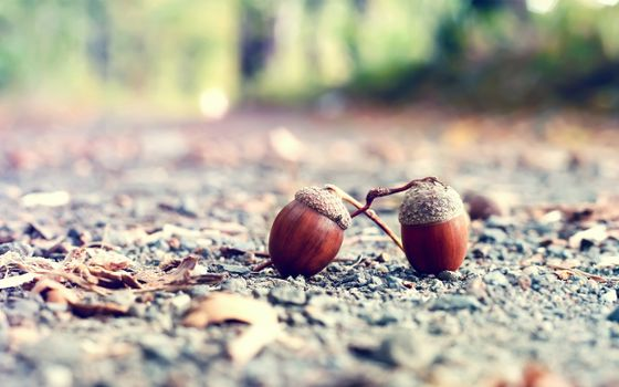 Photo free acorns, earth, forest