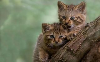 Фото бесплатно котята, маленькие, пушистые