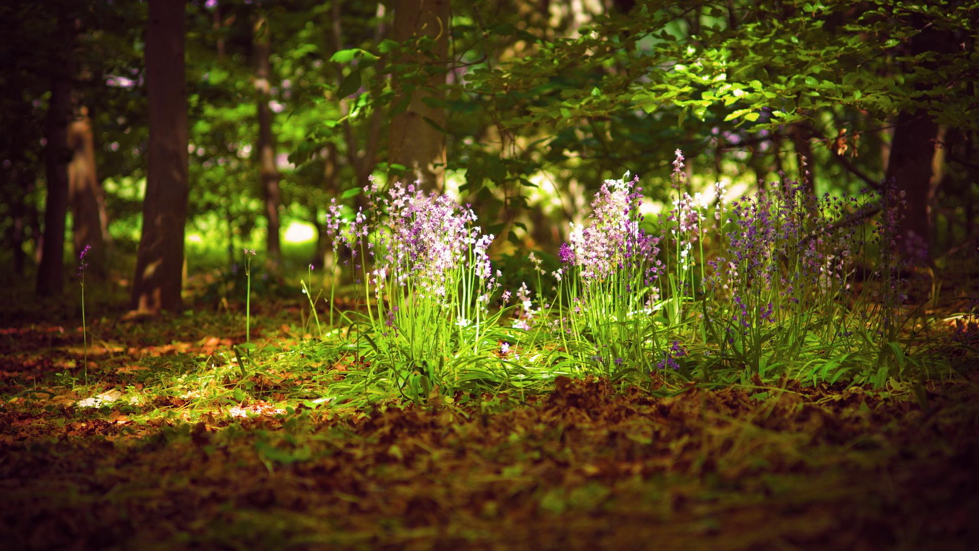 Поляна цветов в лесу