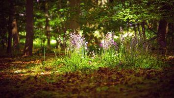 Бесплатные фото лес,трава,цветы,листья,солнце,свет,природа
