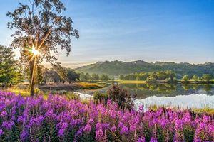 Бесплатные фото лето, озеро, горы, скалы, лес, деревья, цветы