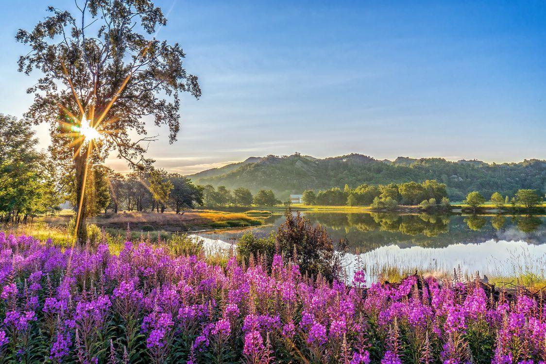 Фото бесплатно лето, озеро, горы, скалы, лес, деревья, цветы - на рабочий стол