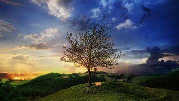 Фото бесплатно лиса, спит, дерево, холмы, небо, закат, облака, ситуации