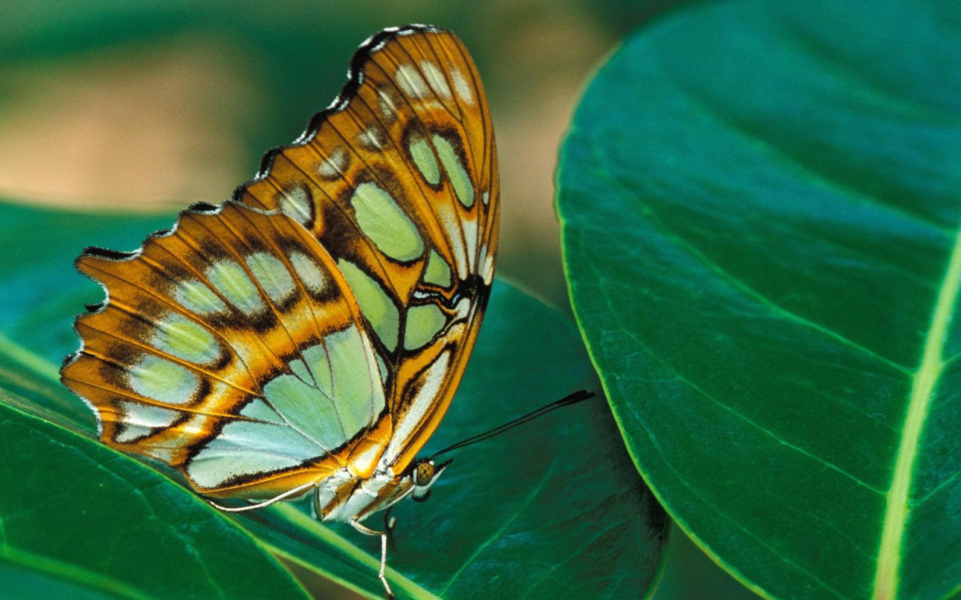 листья, зеленые, бабочка