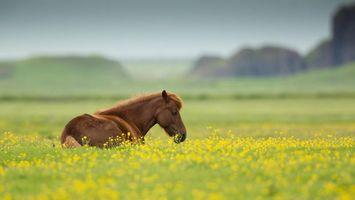 Обои лошадь, морда, грива, круп, трава, цветы, животные
