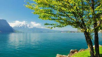 Заставки море, дерево, вода