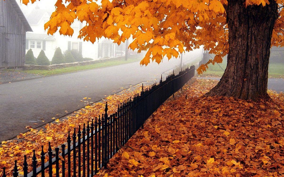 Фото бесплатно осень, деревья, листья - на рабочий стол