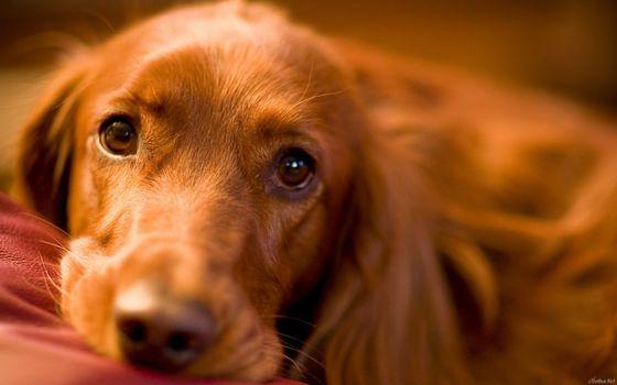 Фото бесплатно пес, щенок, грустный