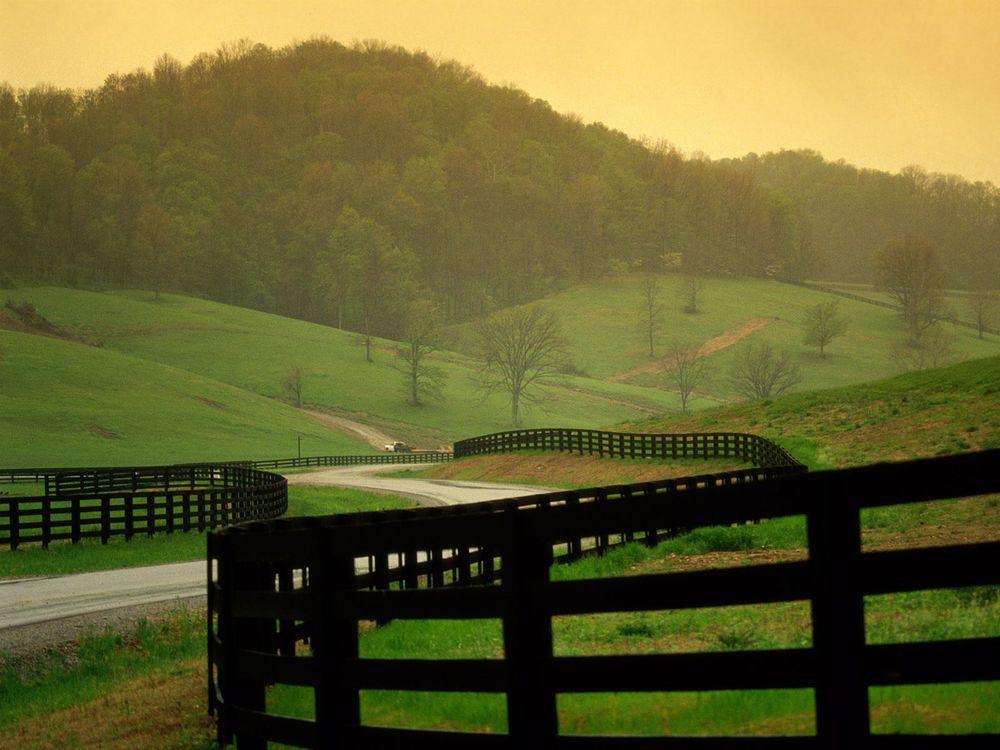 Фото бесплатно поле, трава, дорожка, лес, деревья, холмы, природа, природа