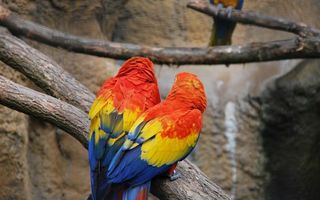 Photo free parrots, paws, wings