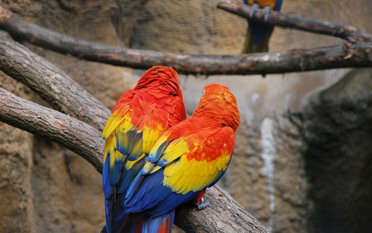 Фото бесплатно попугаи, лапы, крылья - на рабочий стол