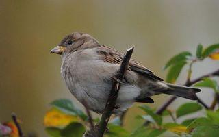 Бесплатные фото птичка,клюв,глаза,перья,крылья,лапки,грудка