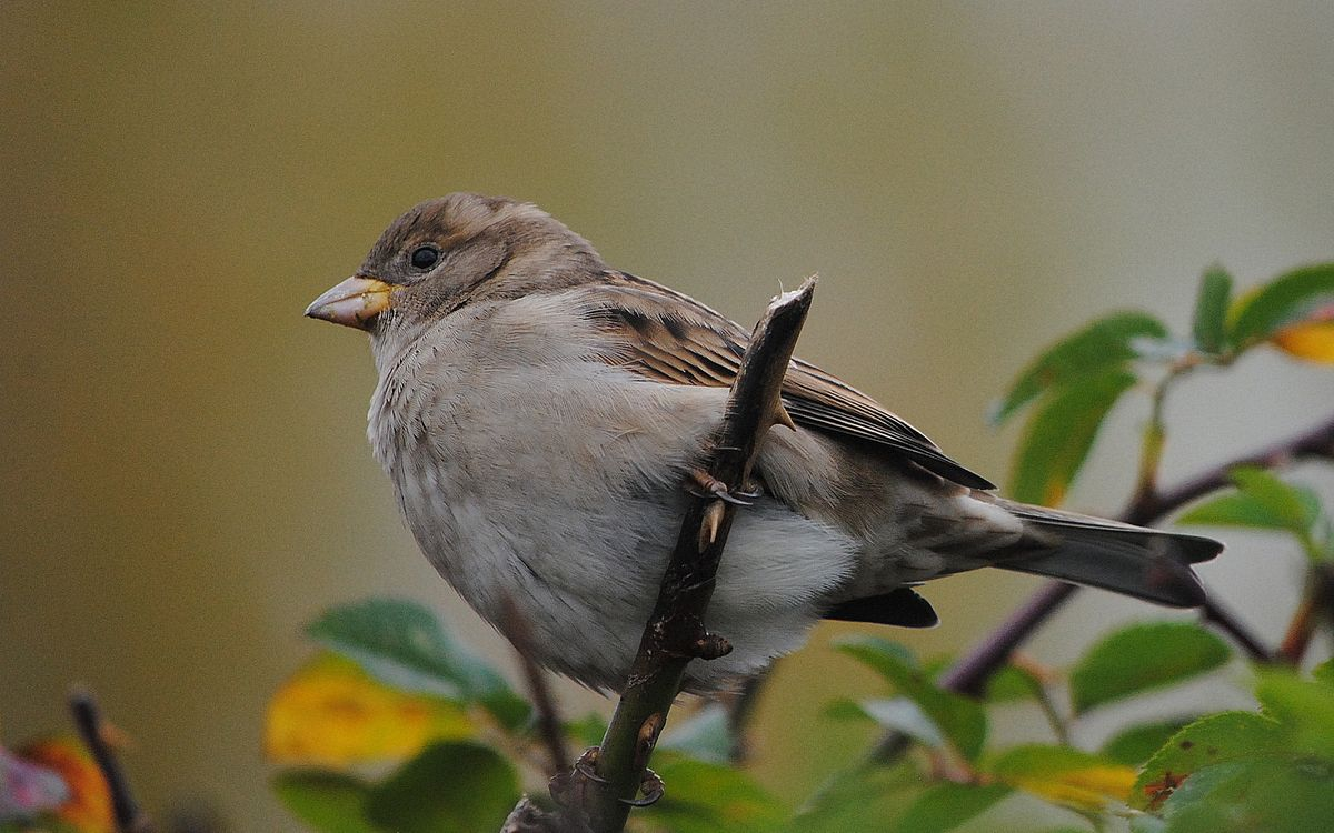 Фото бесплатно птичка, клюв, глаза - на рабочий стол