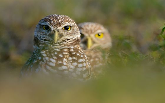 Photo free owls, eyes, yellow