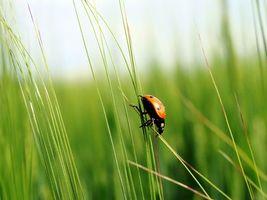 Бесплатные фото трава,божья коровка,макро