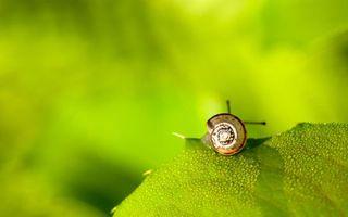 Фото бесплатно улитка, трава, листик