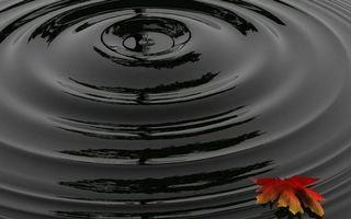 Бесплатные фото вода,капля,круги,волна,лист,плывет,разное