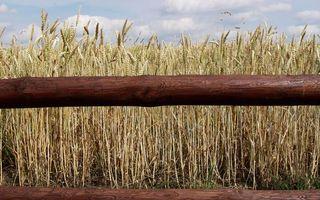 Бесплатные фото зерно, поле, забор, разное