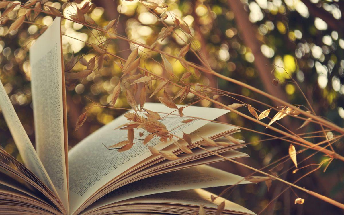 Фото бесплатно зелень, пшеница, колосок, бумага, страницы, книга, разное, разное