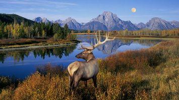 Бесплатные фото олень,река,природа,рога,деревья,пейзаж,озеро