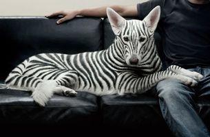 Фото бесплатно джинсы, диван, взгляд, креатив, собака