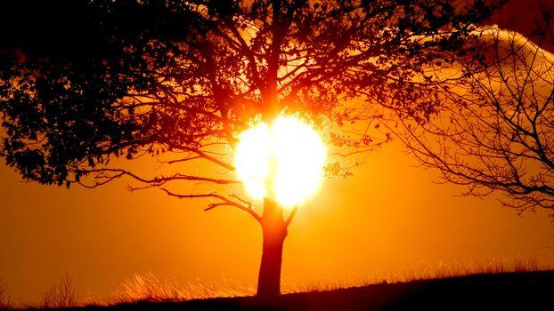 Фото бесплатно закат, дерево, солнце