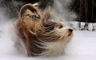 Photo free dog, winter, snow