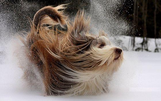 Фото бесплатно собака, зима, снег