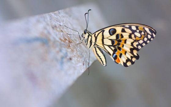 Фото бесплатно насекомые, бабочка, усики