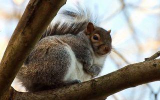Photo free branch, tree, tail