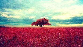 Бесплатные фото дерево,поле,трава,красная,луг,небо,облака