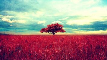 Photo free tree, field, grass