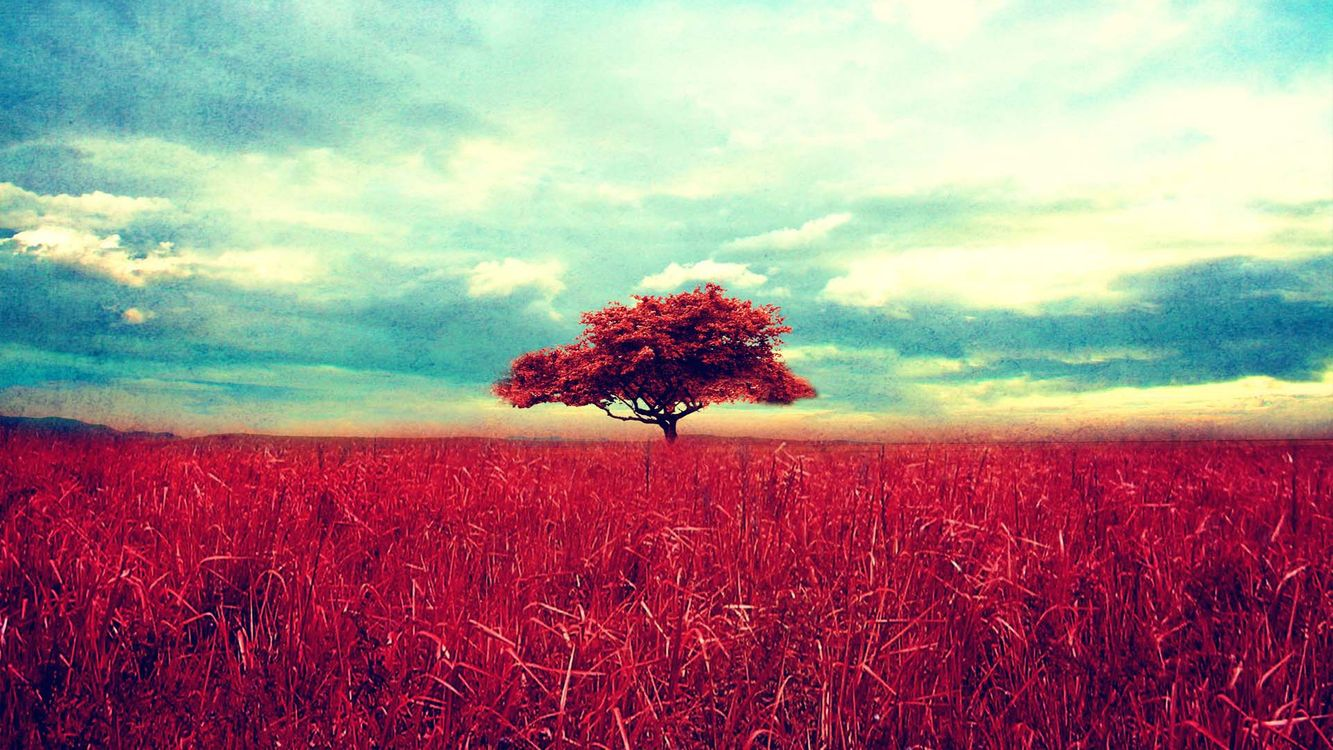 Фото бесплатно дерево, поле, трава, красная, луг, небо, облака, крона, ветки, пейзажи, пейзажи