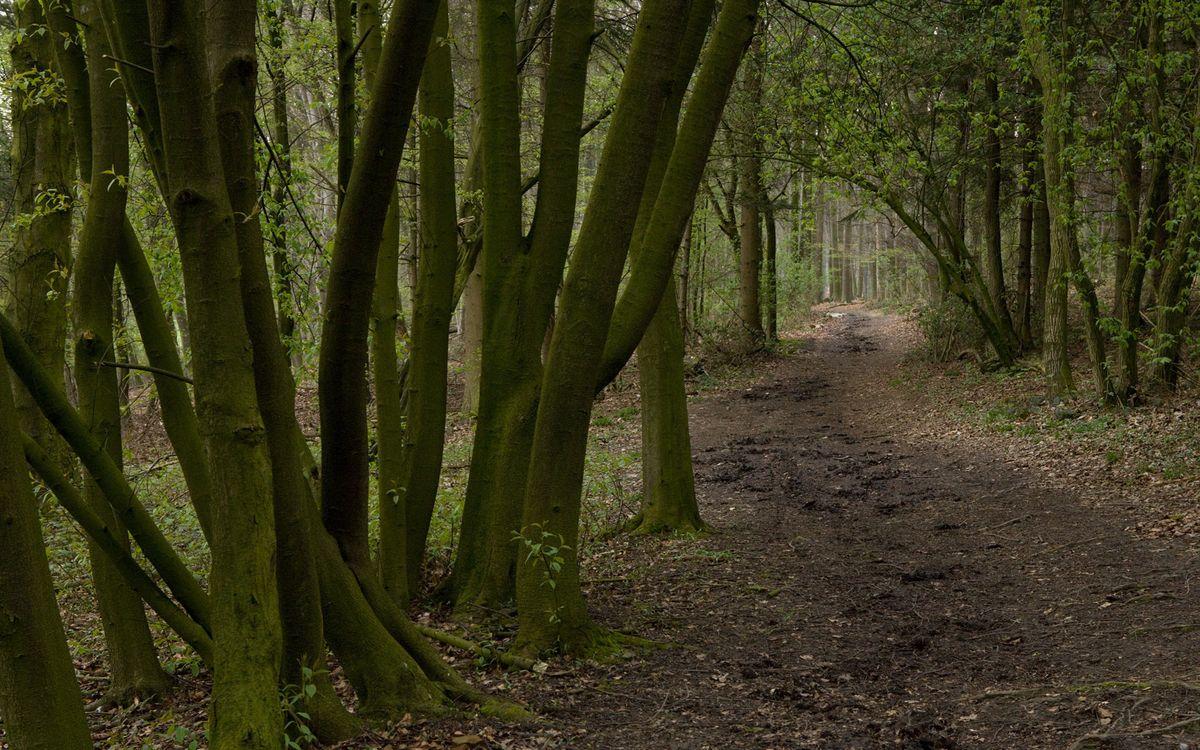 Free photo road, earth, trees - to desktop