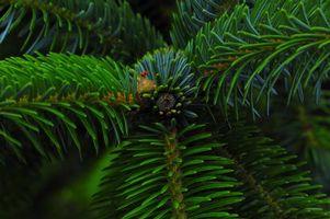Фото бесплатно елка, ветка, хвоя