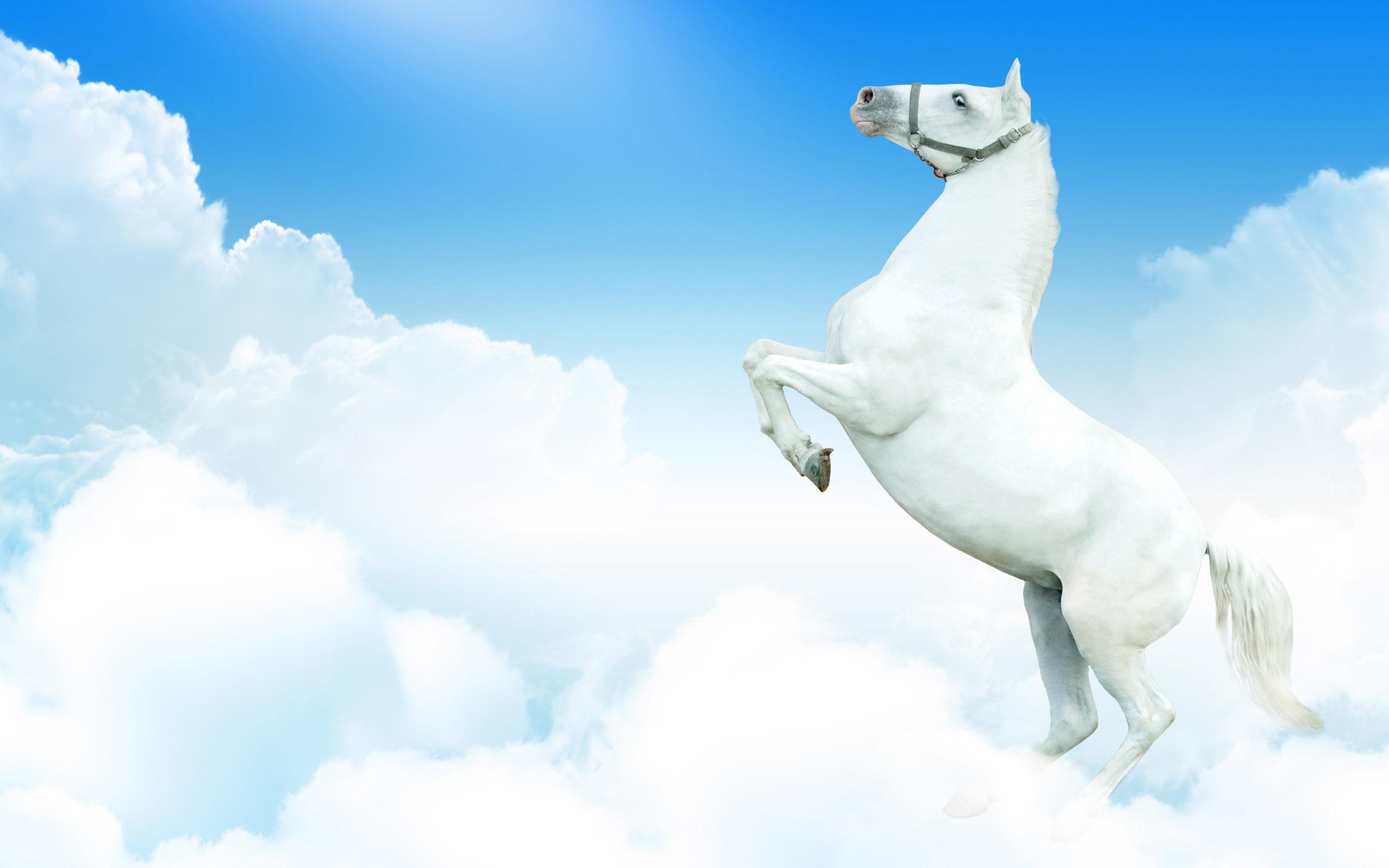 обои для рабочего стола лошади 1366x768 № 447543 бесплатно