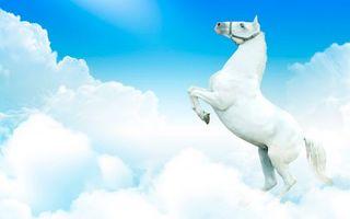 Обои конь, лошадь, грива, голова, уши, глаза, копыта, хвост, небо, облака, животные