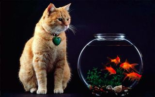 Заставки кот, аквариум, рыбки